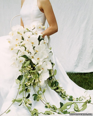 cascade d'orchidées