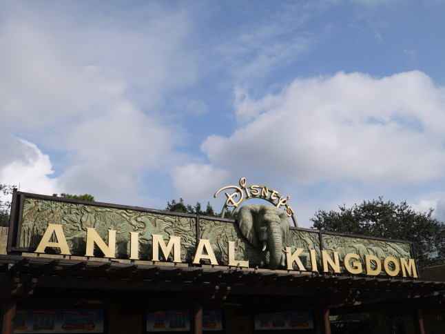 Voyage de noce à Disneyworld Animal Kingdom