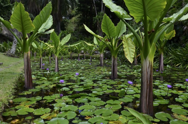 Jardin voyage de noce aux Seychelles
