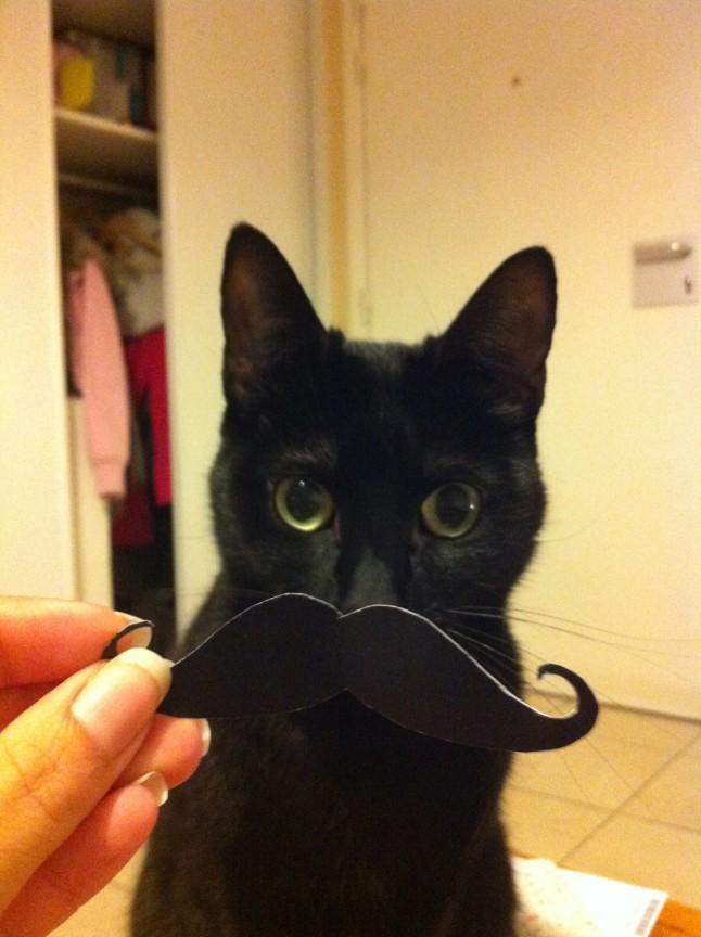 DIY mariage avec chats : moustaches de photobooth