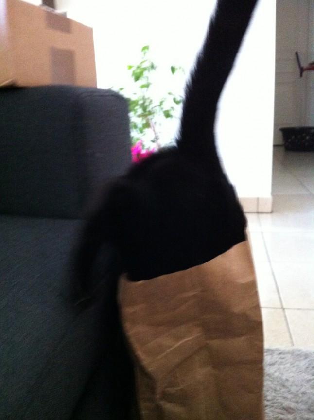 DIY mariage avec chats : l'occuper avec un sac en papier