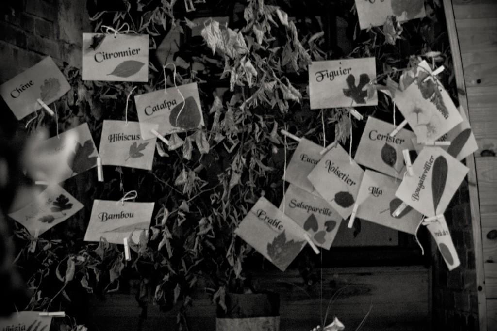 noms de table mariage automne
