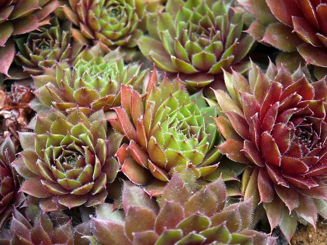 http://pixabay.com/fr/plantes-succulentes-floraux-plantes-498696/