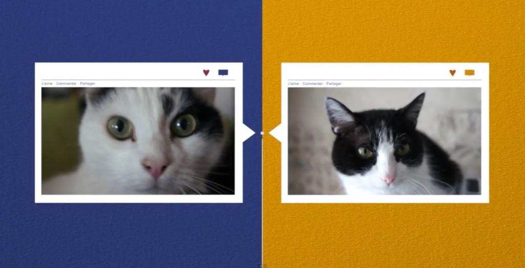 Un save-the-date en vidéo... avec nos chats !