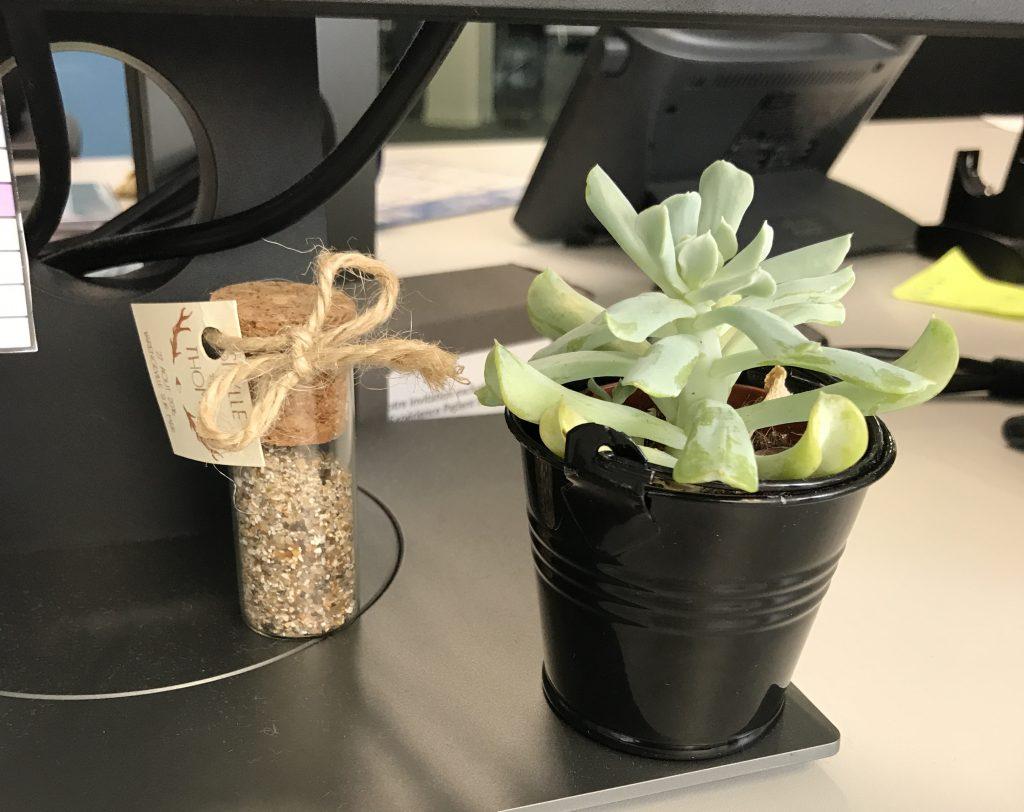 Mes succulentes : cadeaux invités