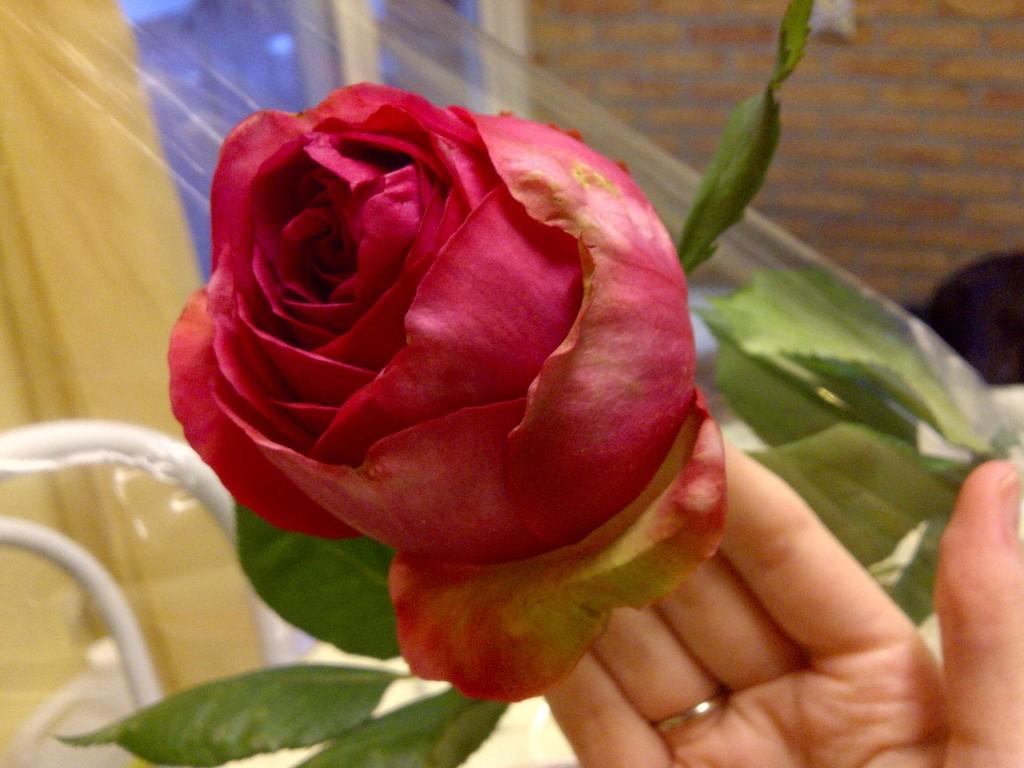 Rose thème couleur mariage