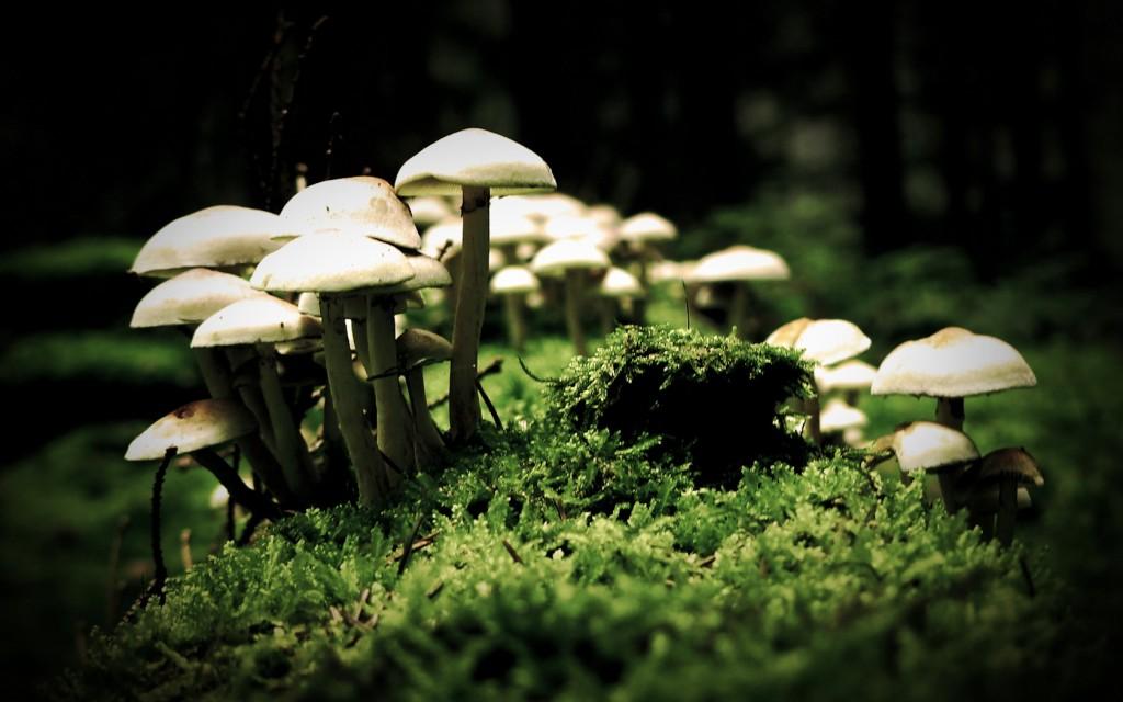 Thème mariage automne en forêt