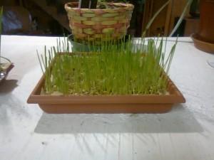 centre de table blé mariage