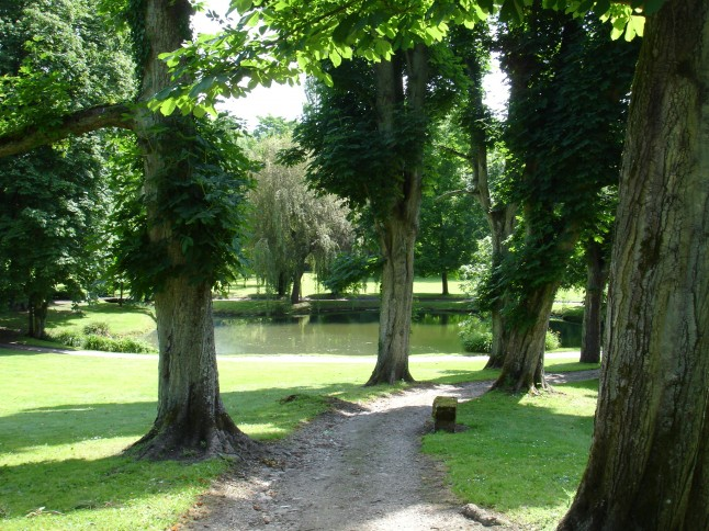 allée bordée d'arbres et lac