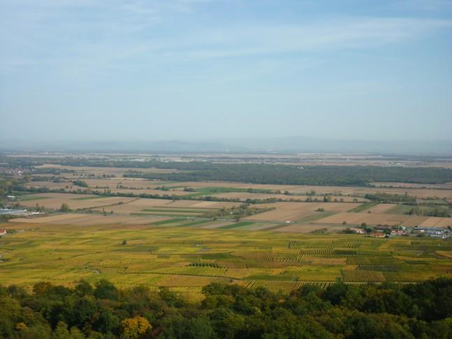 Vignobles Alsace