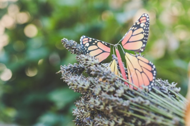 surprend et enchante tes invit s avec des papillons. Black Bedroom Furniture Sets. Home Design Ideas