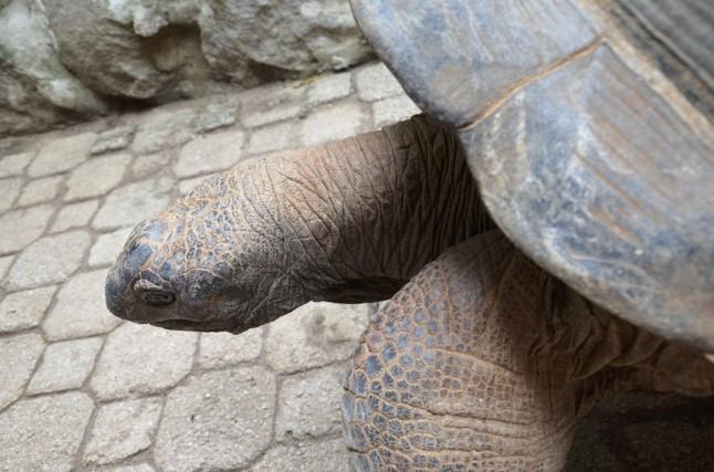 Ile aux cerfs voyage de noce aux Seychelles