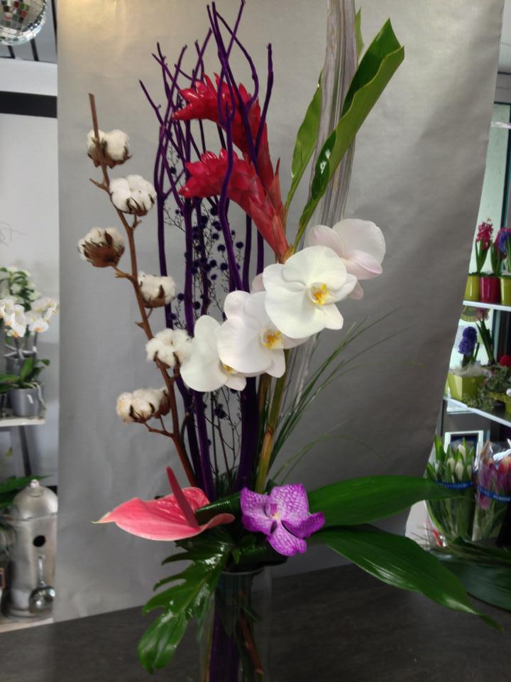 Rêve d'Orchidée