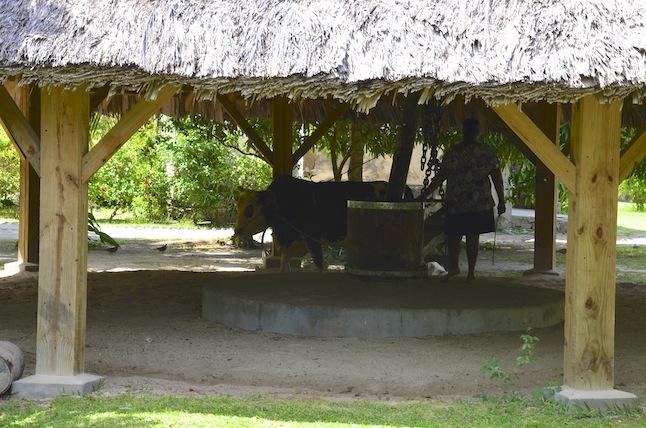 Musée à ciel ouvert voyage de noce aux Seychelles moulin