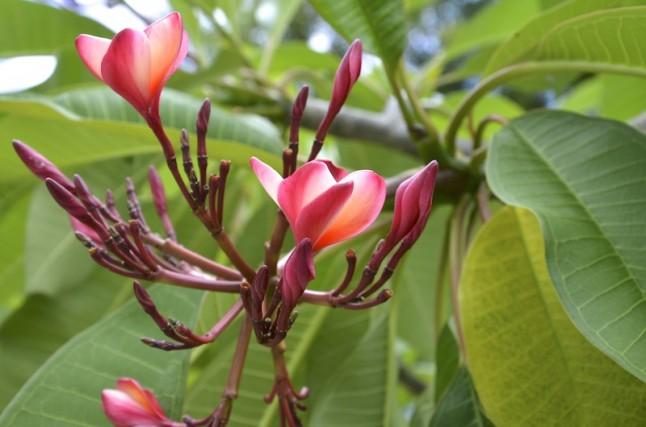 Fleurs des Seychelles voyage de noce
