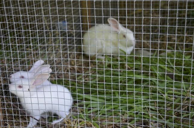 lapins musée Praslin voyage de noce aux Seychelles