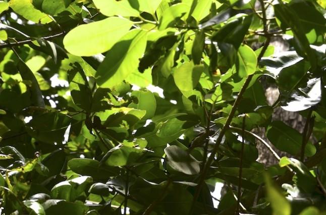 végétation réserve de la Veuve aux Seychelles