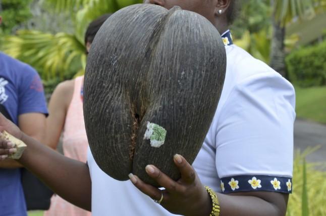 Coco fesses voyage de noce aux Seychelles