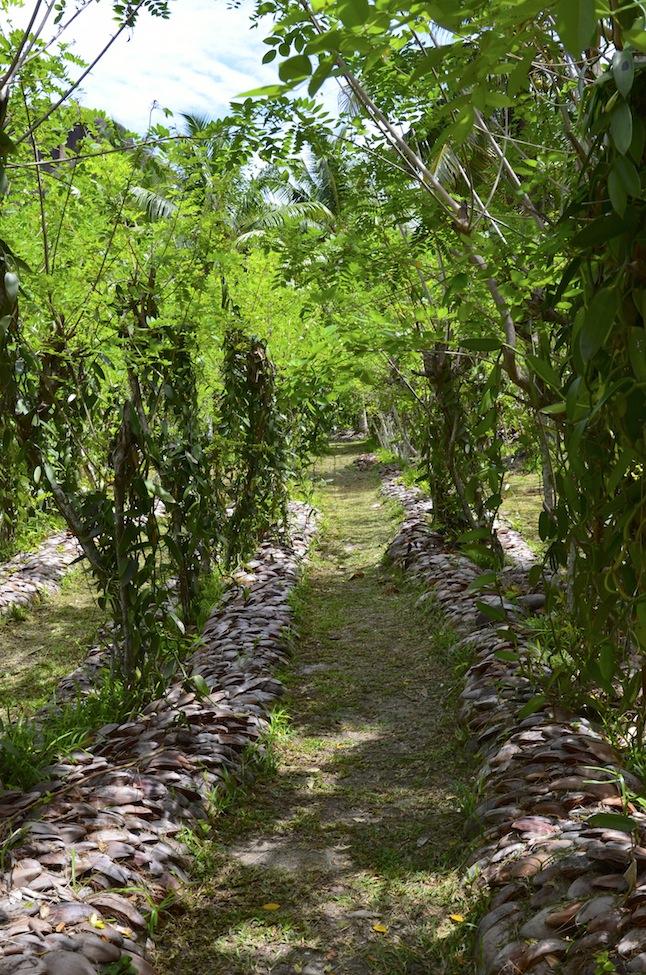 plans de vanille voyage de noce aux Seychelles