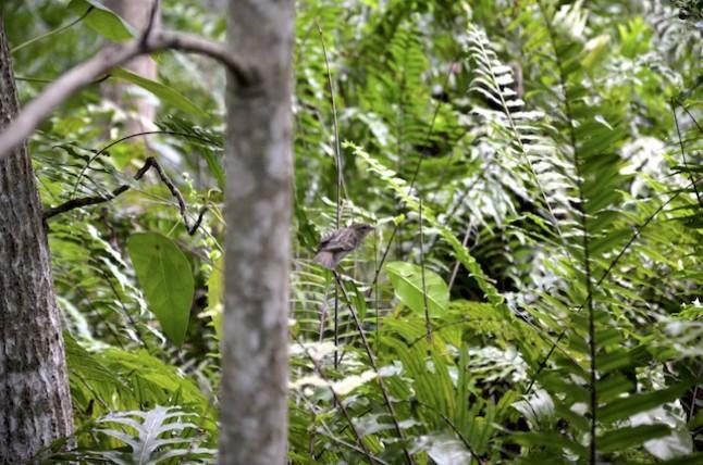 oiseau tropical voyage de noce aux Seychelles