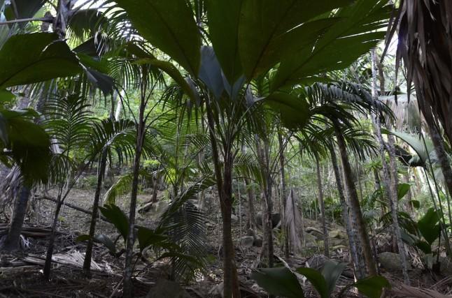 Vallée de mai flore voyage de noce aux Seychelles