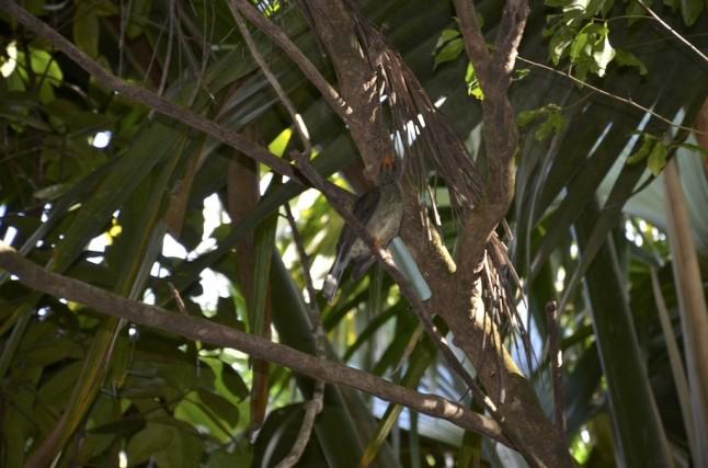 Vallée de mai flore sauvage voyage de noce aux Seychelles