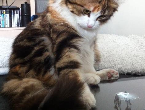 DIY mariage avec chats : les occuper avec des applications pour chats (!!!)