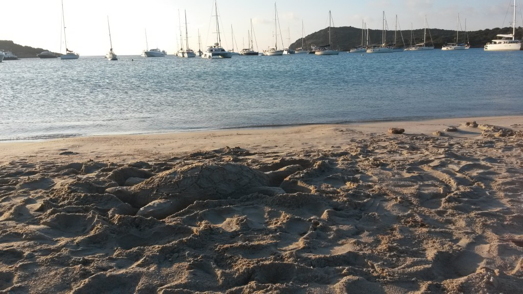 Photo perso - plage tortue