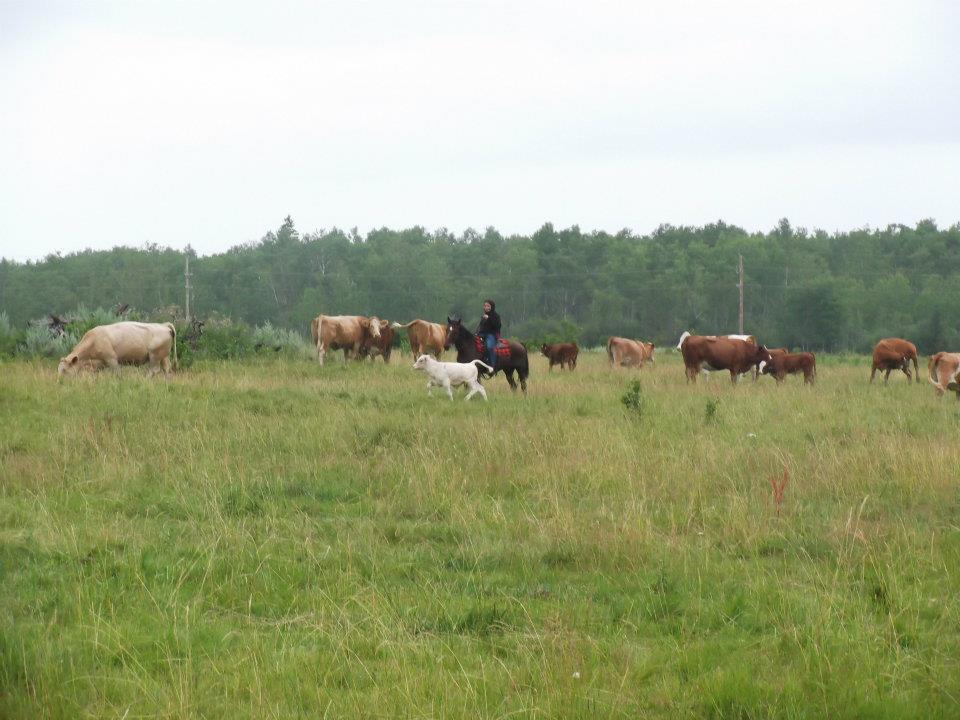Ranch canadien