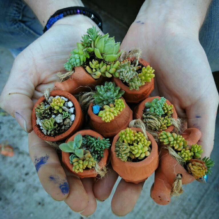 plantes-succulentes-cadeau-invite-mariage