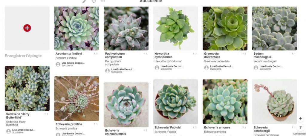 Mes succulentes : déco et cadeaux invités