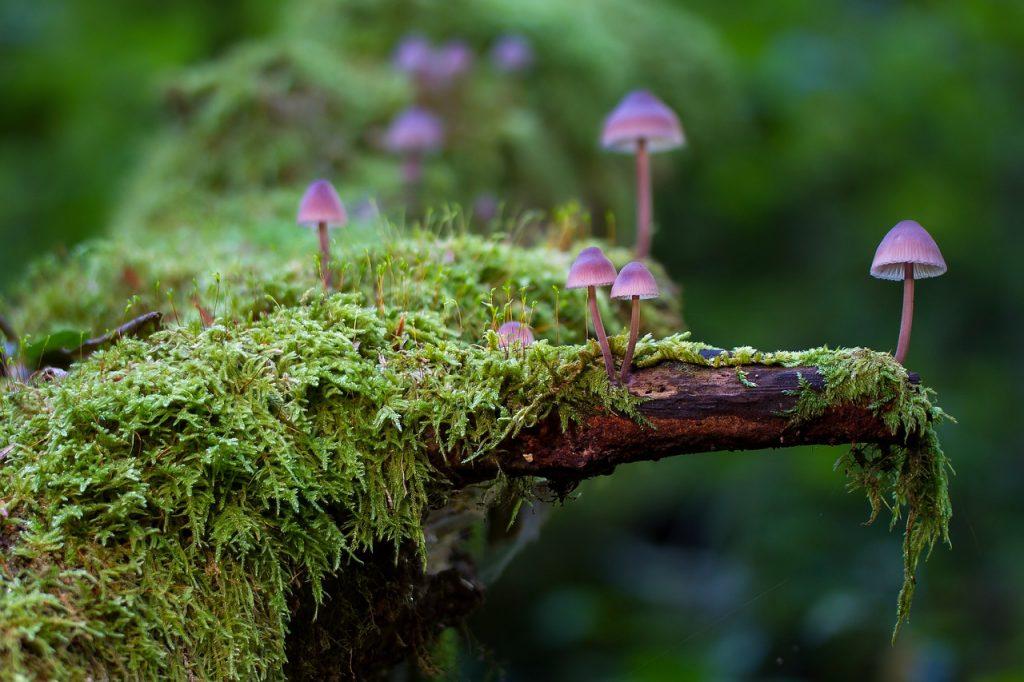 Décoration de mariage au thème forêt nature