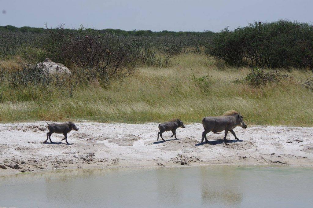 Ma demande en mariage tant attendue en Namibie
