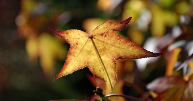 L'automne, cette si jolie saison