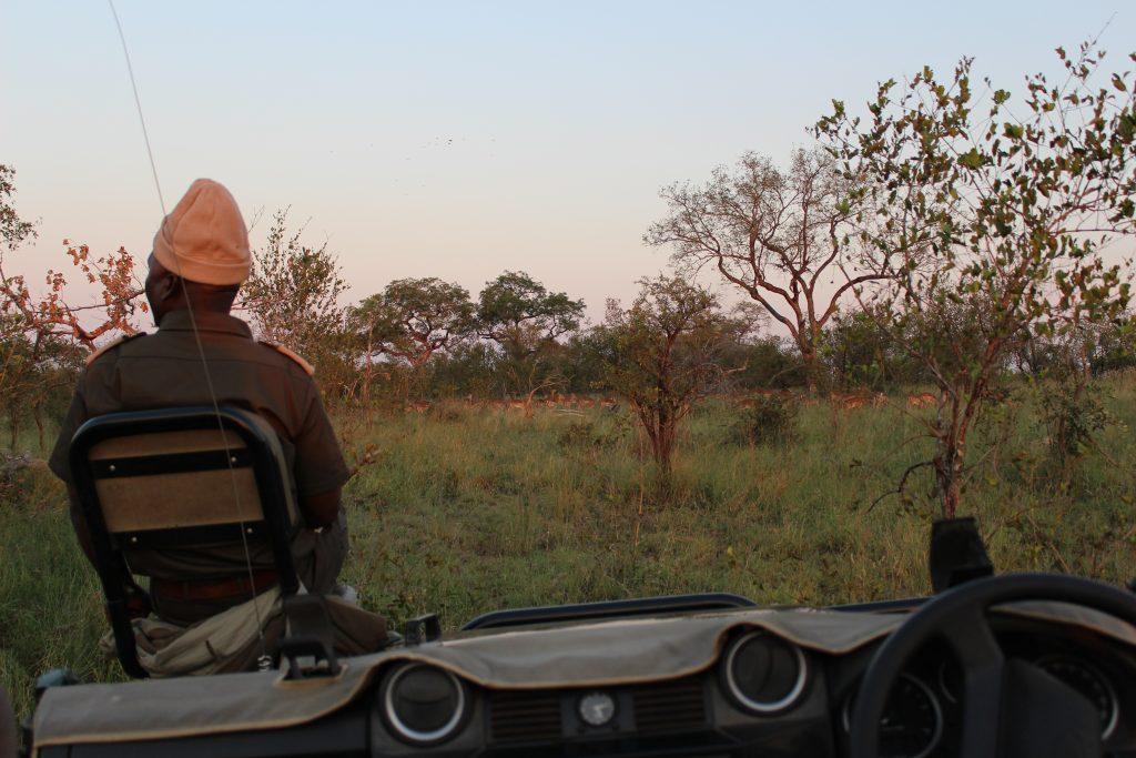 Notre voyage de noces safari en Afrique