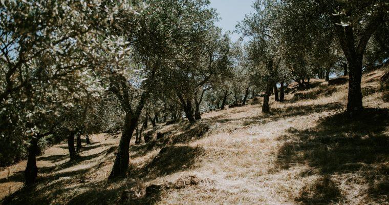 Mon mariage multi-culturel en Andalousie : un réveil en douceur, vite rattrapé par la réalité