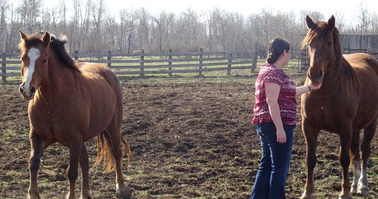 Mon mariage entre traditions et harmonie: au milieu des vaches et des chevaux