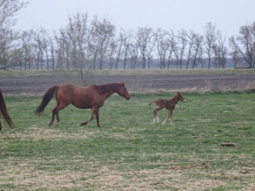 Mon voyage de noces à Manitoba, dans des ranchs au milieu des vaches et des chevaux