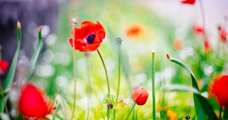 L'épisode sans fleurs fraîches – Partie 1