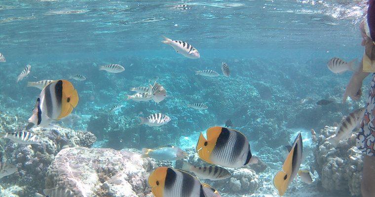 Notre voyage de noces en Polynésie, à la découverte du paradis : escale à Raiatea