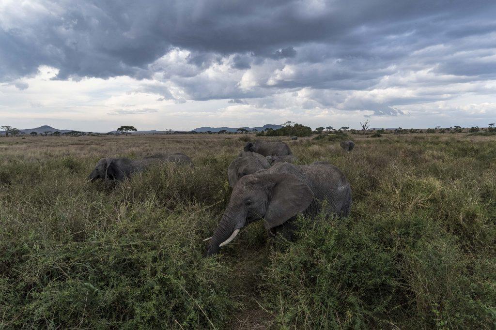 Un safari en Tanzanie pour notre voyage de noces !