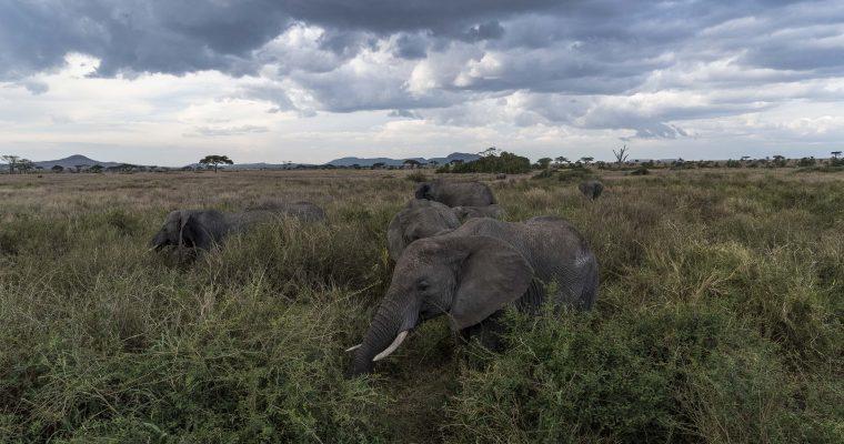 Le voyage de noces de nos rêves : et si c'était un safari ?