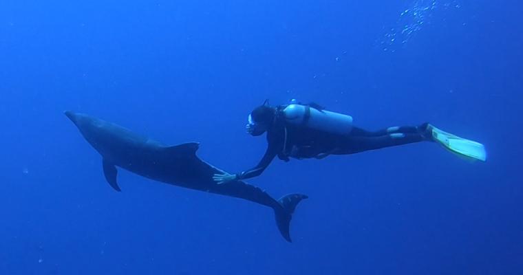 Le fabuleux voyage de noces des Chatons en Polynésie : 1 mois / 8 îles